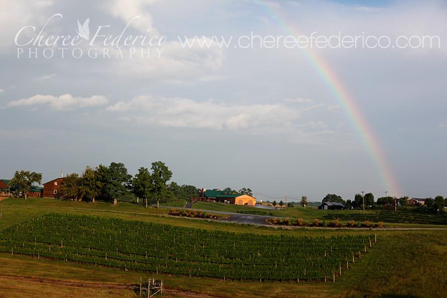 Rainbow and Vineyard