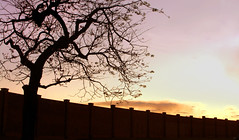 Endlessly (osvaldoeaf) Tags: life flowers autumn winter light sunset brazil sky orange sun tree nature leaves silhouette wall night clouds composition dark dawn evening spring still pattern afternoon angle dusk perspective cerrado goiânia goiás continuous endlessly endelss
