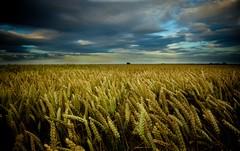 THE KILLING FIELDS (Darren Speak) Tags: history death yorkshire leeds battle fields palmsunday towton 1461 towtonbattlefield