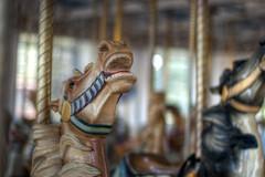 dream (nosha) Tags: new vacation sculpture horse usa holiday haven art beautiful beauty july ct carousel newhaven 2010 nosha