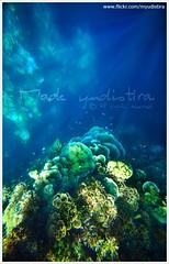 Beyond The Sea (Bali Freelance Photographer) Tags: sea bali fish coral work canon eos photographer underwater culture scuba diving snorkeling reef freelance adat budaya balinese fotografer unik menjangan yudis dicapac myudistira madeyudistira yudist myudistiraphotography