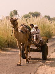 indnr7000049.jpg (Keith Levit) Tags: road india man men green grass pull photography asia fineart country countries camel grasses roads cart camels carts pulls levit keithlevit keithlevitphotography