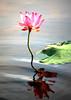 娉婷 (meihua0920) Tags: passiondéclic