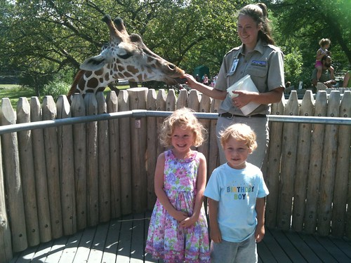 giraffe feeding at the zoo
