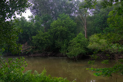 Fascinated by Marshes (MarieFrance Boisvert) Tags: green fog earlymorning marsh rh marshes lennoxville hrd