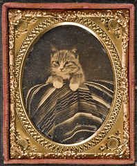 [Cat posed with Mexican serape] (SMU Central University Libraries) Tags: cats texas caturday ambrotypes