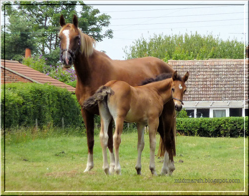 Mare and Foal 4
