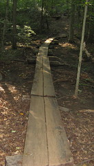 Planks in the trail