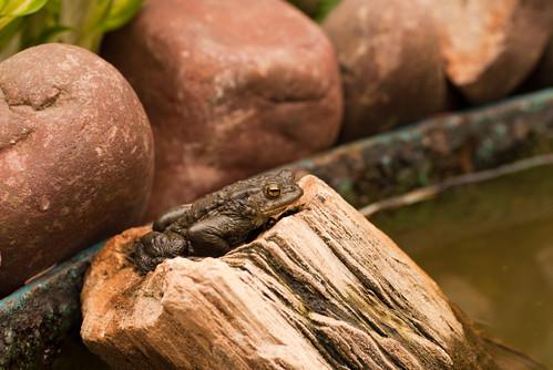 Froschleben - Entspannung