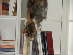 Grace in the bookcase