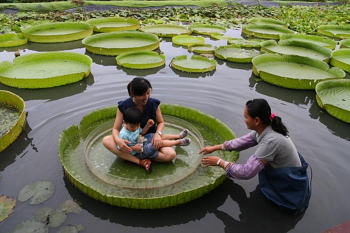 台南白河蓮花公園(水連公園)0041