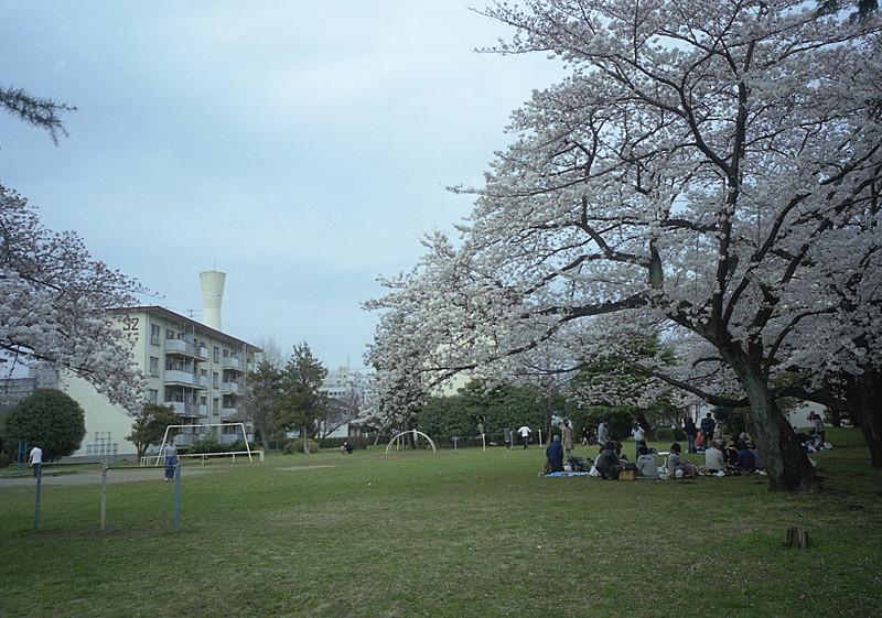 阿佐ヶ谷住宅の桜