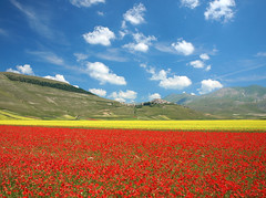 Sea of Colors (filippo rome) Tags: flowers italy italia day cloudy poppies colori umbria papaveri castelluccio campi fioritura lenticchie castellucciodinorcia