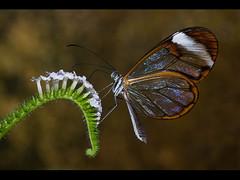 Butterfly on Flower (chippyrob) Tags: colour butterfly nikon dapa d80 robertpowell dapagroup dapagroupmeritaward chippyrob dapagrouphalloffame dapagroupmeritaward3 dapagroupmeritaward5 dapagroupmeritaward4 dapagroupmeritaward2 dapagroupmeritaward1