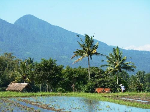 Bali-Tirtagangga (58)