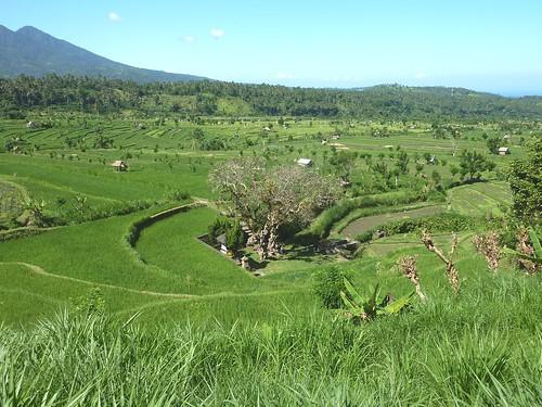 Bali-Tirtagangga (35)