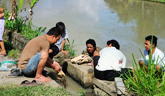 Cleaning Dead Ducks in the River (cwgoodroe) Tags: summer bali dog gambling colors clouds reflections indonesia duck fight tour rice culture palm padi betting patties cockfight ubud chiken paddies sate batubulan