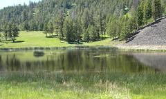 1226 (Jenny Harned Tabrum) Tags: nature wyoming yellowstonepark