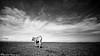 Lone Cow (hijo_de_ponggol) Tags: blackandwhite bw cow kodakero