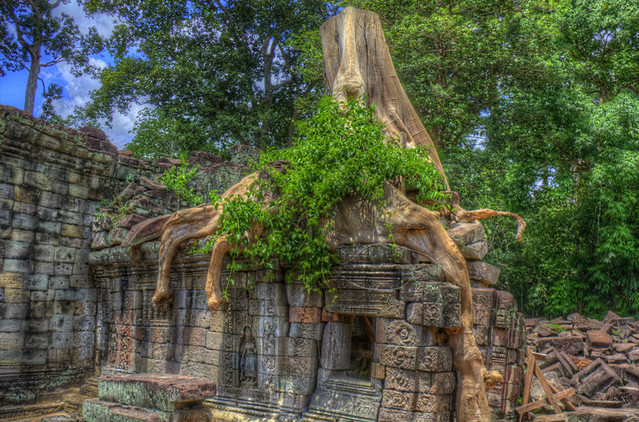 Angkor Tree House in HDR