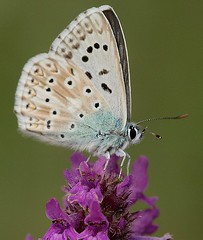 018 (Luciano 95) Tags: flowers flower macro nature fauna butterfly bug bravo searchthebest wildlife meg insects best fabulous 1001nights soe animalplanet breathtaking pictureperfect amazingcolors defender gmt excellence smrgsbord potofgold naturesfinest b