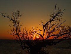 And the sun burns out tonight... (Alex Mary) Tags: ocean sunset sea sun france tree silhouette talmont talmontsurgironde