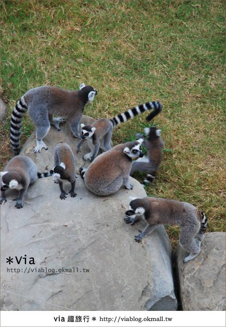 【新竹住宿】來去和動物住一晚~關西六福莊生態渡假旅館17