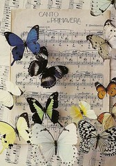 D.E.T.E. RR #B14 (selphie10) Tags: music colors butterfly notes butterflies rr insects sheets mendelssohn musicsheet artunlimited deterr cantodiprimavera