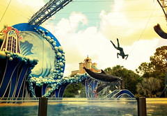 Flight (Cameron Moll) Tags: orlando florida dolphins seaworld