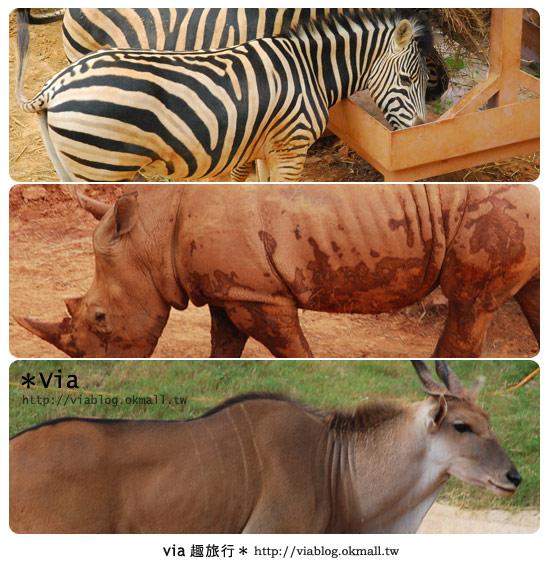 【新竹住宿】來去和動物住一晚~關西六福莊生態渡假旅館21