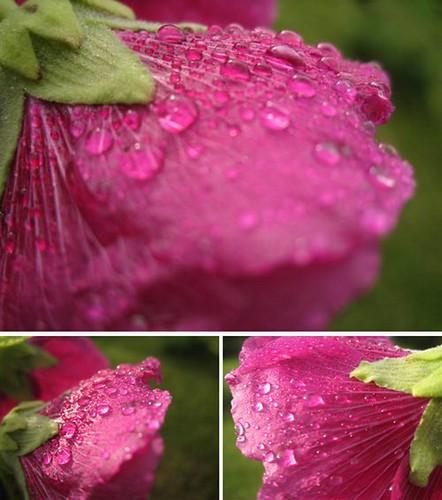 Regndråber på blomst
