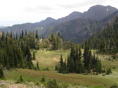 Meadow below Marmot Pass.