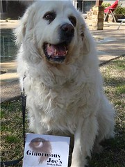 Ginormous Joe with his book (Author S C Cunningham) Tags: charity rescue dog london art love children book dallas funny spin books bark childrens author nasty picturebook pyreneesmountaindog kidbook goodwinsoverevil