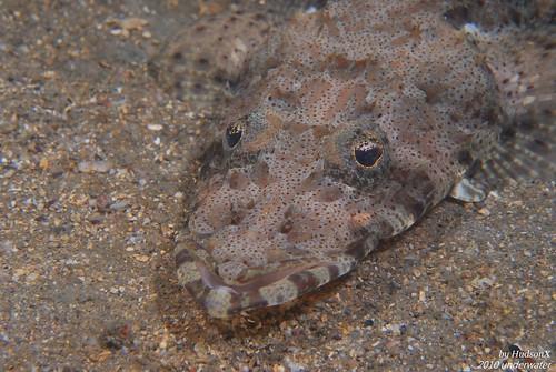 表情很有喜感的鱷魚魚