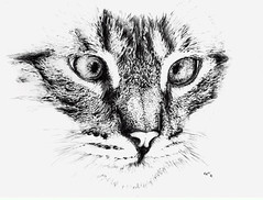 Cat - pen drawing 2010 (Charlotte Alexandra Tatjana) Tags: cats art pen pencil cat arte drawing kunst tiger gato neko katze niko  gatto katzenbild nekochan ballpoint zeichnung catportrait kugelschreiber ritrato gattos catdrawing