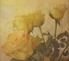 Simply Four Roses ... (virtually_supine) Tags: flowers roses stilllife painterly textures indoors brightlight layers blending upcloseandpersonal tistheseason memoriesbook photoshopelements7 awardtree daarklands selectbestfavorites selectbestexcellence sbfmasterpiece