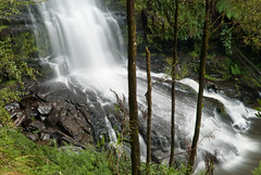 Great Ocean Road 54 (Scott Weatherson) Tags: trees nature water forest waterfall australia victoria greatoceanroad lorne surfcoast erskinefalls