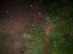 Lama após a chuva no Jardim