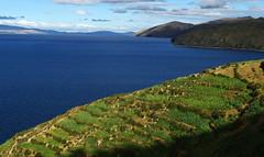 Titicaca (Gregor  Samsa) Tags: blue sky lake peru titicaca water field clouds lago deep bolivia fields