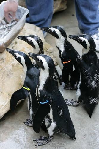 Penguins!!!!!!!!!!
