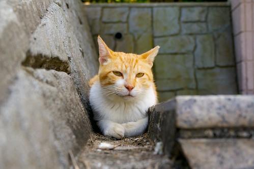 城ヶ島の溝猫