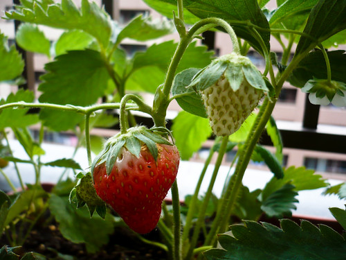 My garden July 01, 2010
