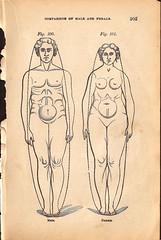 Figure 100 - MaleFemale (Kalyber) Tags: usa text il hoffmanestates maleform femaleform bwfigure