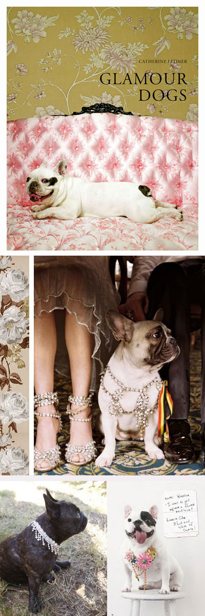 glamour frenchie