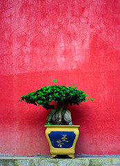 Hong Kong (Nick_Runyan) Tags: red tree art hong kong