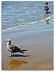 I am Going My Way! (medaibl) Tags: ocean california water birds pacific hills centralcoast medhathi coastalandwaterviewsbymi