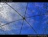 Feeling Of Bird / ความรู้สึกของน้องนก (AmpamukA) Tags: travel blue roof sky bird beautiful metal garden pattern place secret feel cage thai feeling ฟ้า ชลบุรี nongnuch นก สวน ของ นงนุช totallythailand ampamuka กรง เหล็ก tripleniceshot ความ ท้อง ขัง รู้สึก