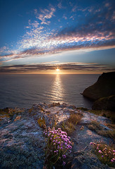 Boscastle Thrift at Sunset (my name is Ade) Tags: pink sunset star cornwall thrift boscastle takeaview lpoty