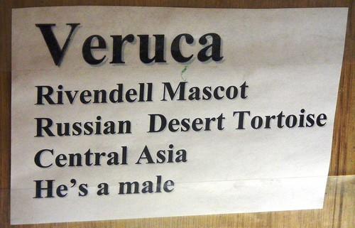 Veruca, Rivendell Bookstore, Monpelier, Vt.
