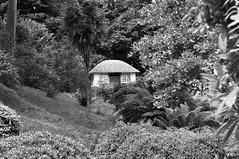 Glendurgan Gardens-13.jpg (David Wint) Tags: england cornwall mawnansmith glendurgangarden